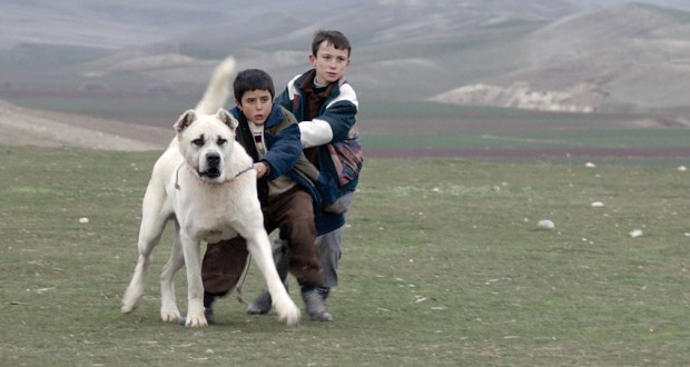 Sivas-Film